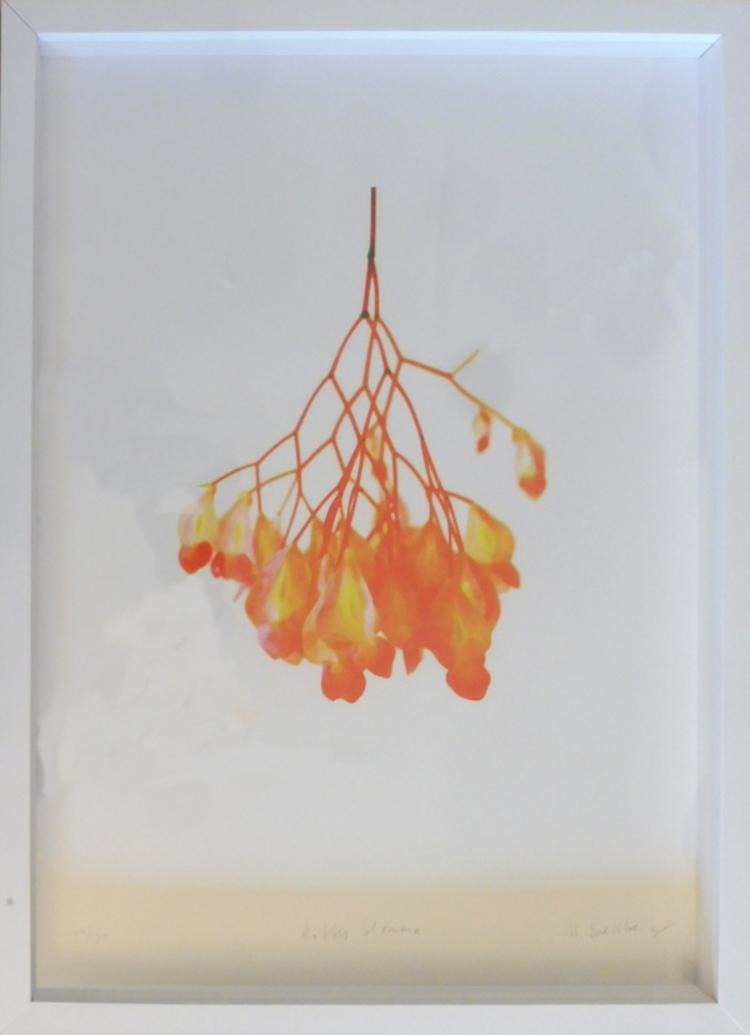'34. Roffes blomma', 2020, ett konstverk av Marianne Svedberg